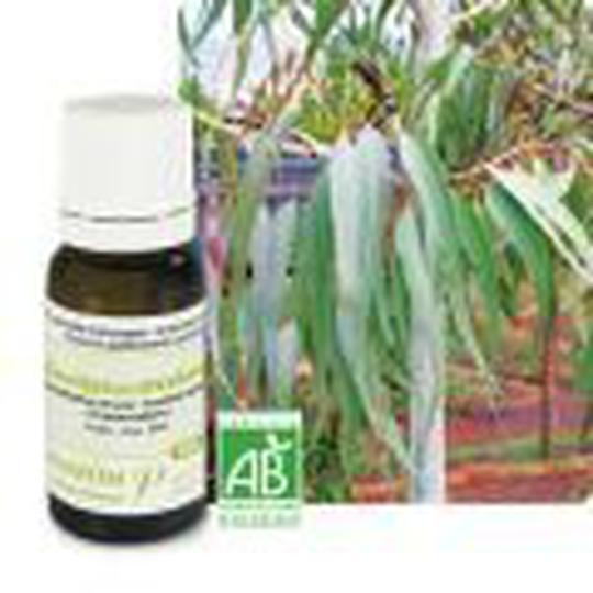 Eterično ulje eukaliptus limunski 10 ml, Pranarom